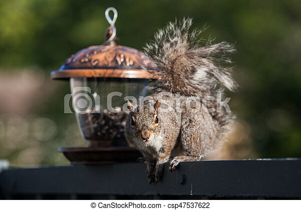 Eating squirrel - csp47537622