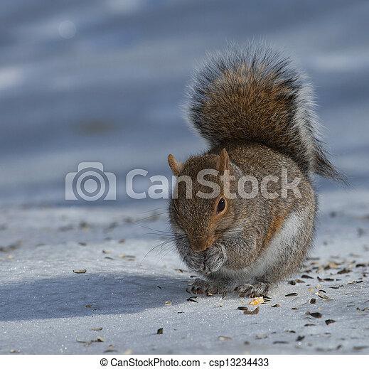 Eating squirrel - csp13234433