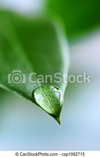 eau, feuille, goutte, vert - csp1062715