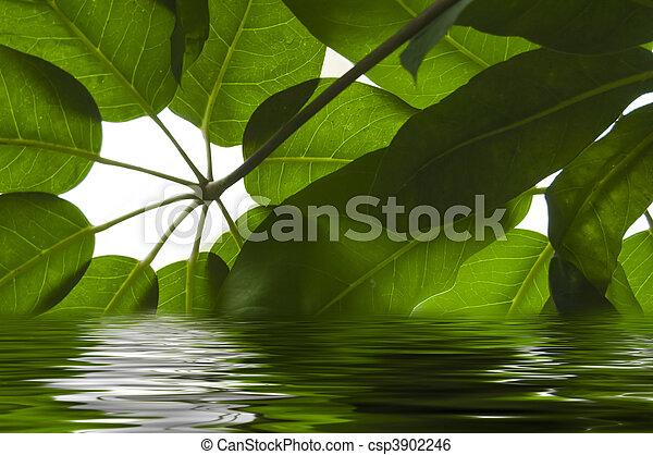 eau, feuilles - csp3902246