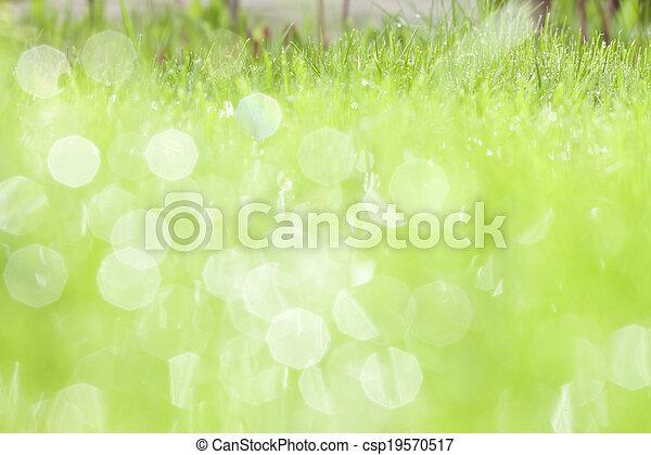 eau, herbe, vert, rosée - csp19570517