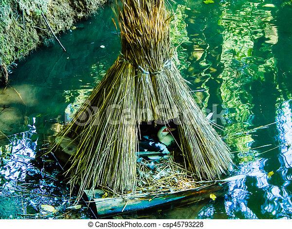 eau, maison, sauvage, paille, canard - csp45793228