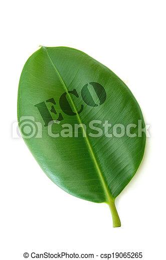 eco - csp19065265