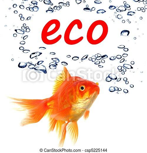 eco - csp5225144
