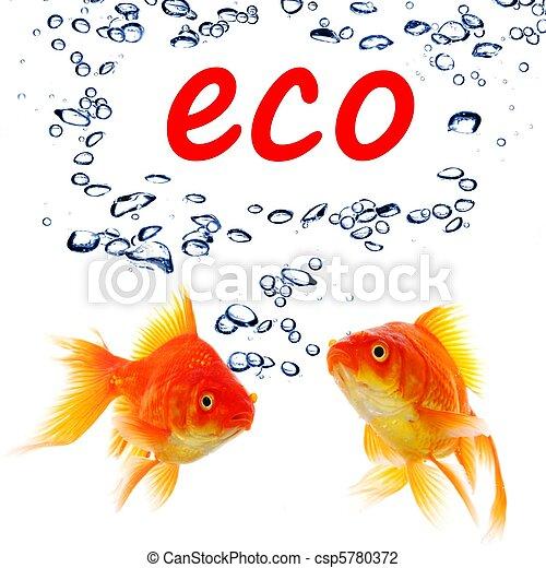 eco - csp5780372