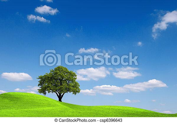 ecologia - csp6396643