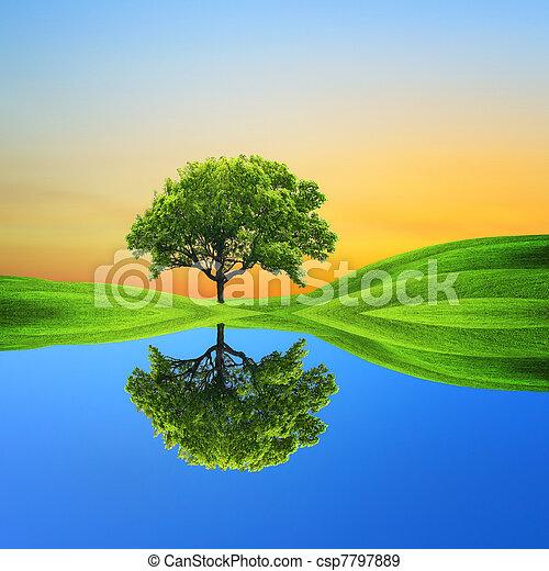 ecologia - csp7797889