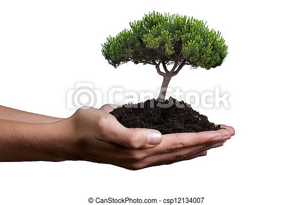 ecology concept - csp12134007