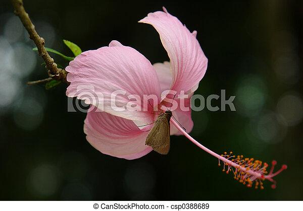 ecuadorian butterfly - csp0388689