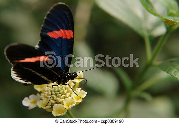ecuadorian butterfly - csp0389190