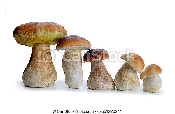 Edible mushroom Boletus - csp51228241