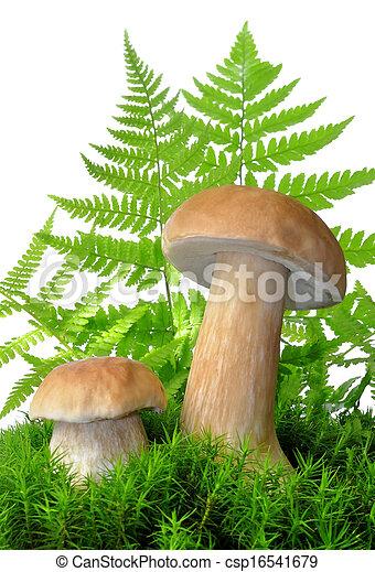 edible mushroom - csp16541679