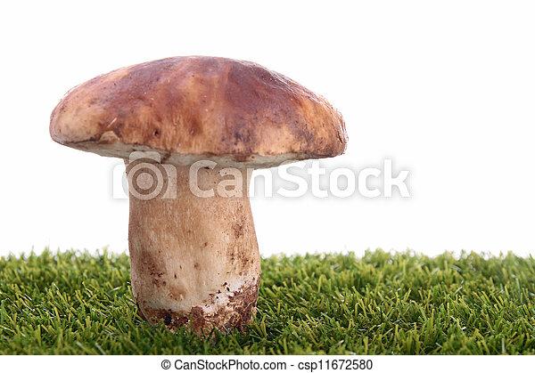 edible mushroom - csp11672580