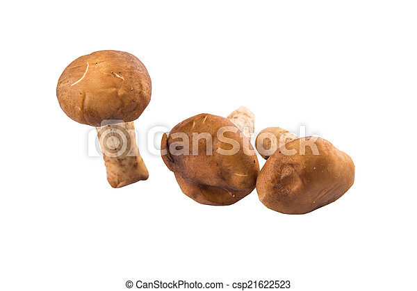 Edible Mushroom - csp21622523