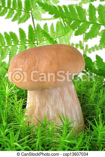 edible mushroom - csp13607034