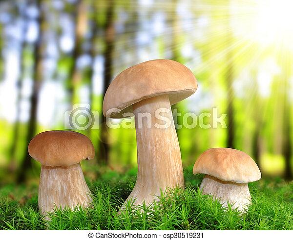 Edible mushroom - csp30519231