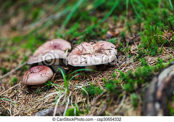 edible mushroom  - csp30654332