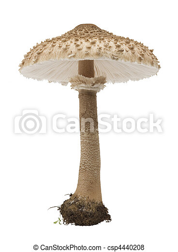 edible mushrooms - csp4440208