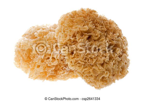 Edible White Fungus Isolated - csp2641334