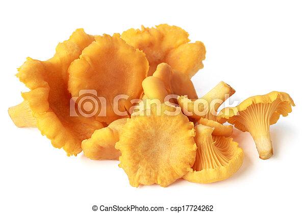 Edible wild mushroom chanterelle (Cantharellus cibarius) - csp17724262