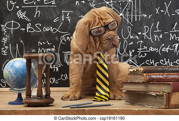 educación, perro - csp19161190
