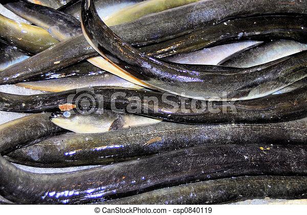 eel fish - csp0840119