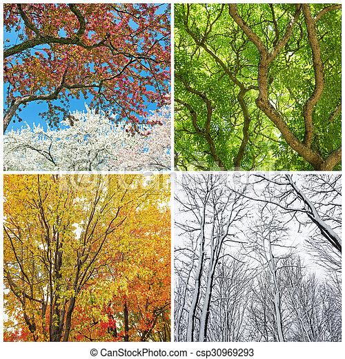 sommer vinter efterår forår