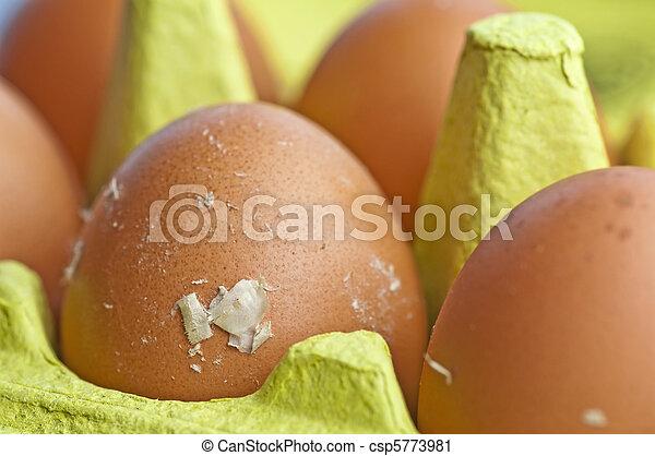 egg - csp5773981