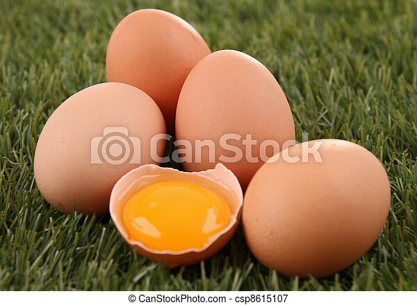 egg - csp8615107