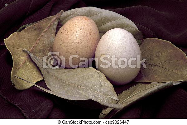 Egg - csp9026447