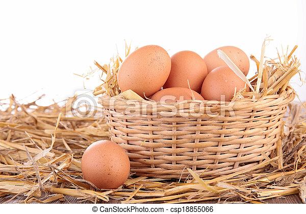 egg - csp18855066