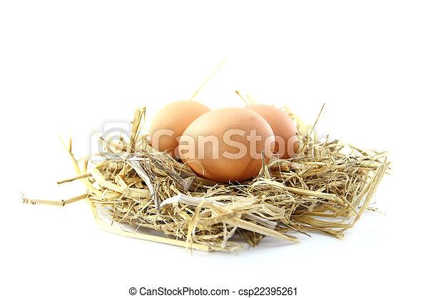 egg - csp22395261