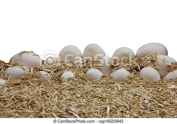 egg - csp16503943