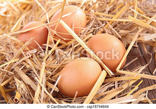 egg - csp18744644