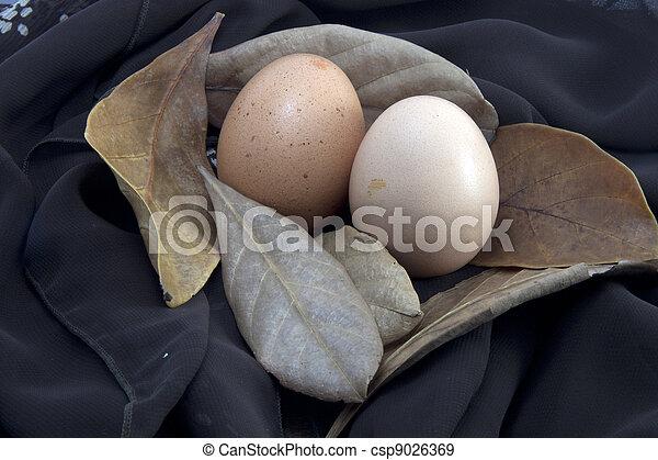 Egg - csp9026369