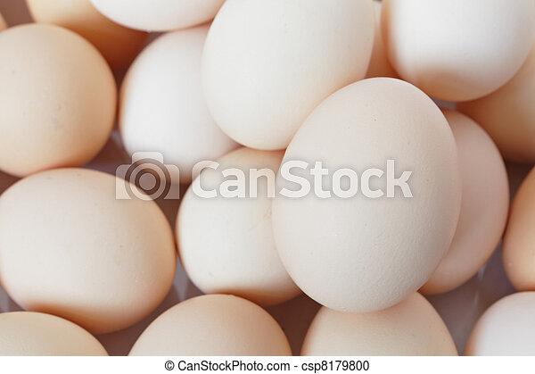 egg - csp8179800