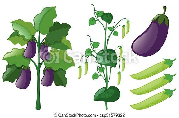 Eggplant And Greenpea Trees On White Background Illustration