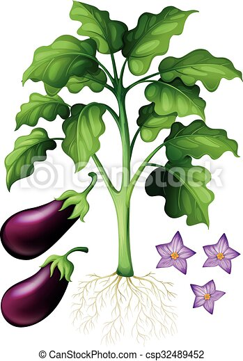 Eggplants With Flower And Roots Illustration