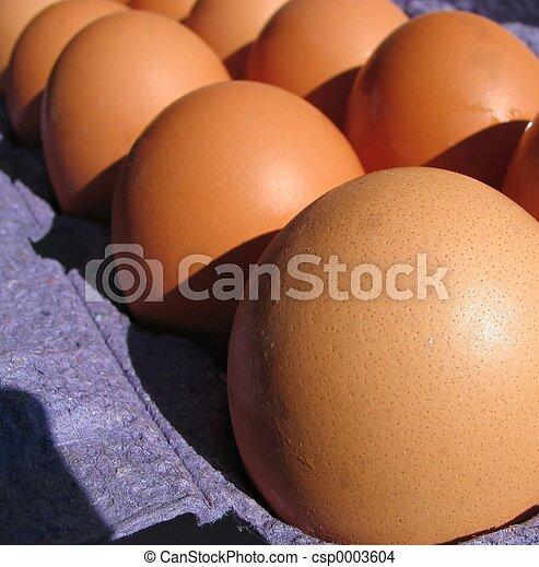 Eggs in a row - csp0003604