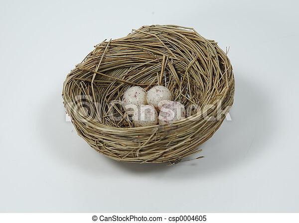 Eggs in Nest - csp0004605