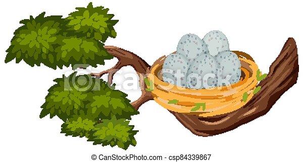 Eggs in the bird nest on tree branch - csp84339867