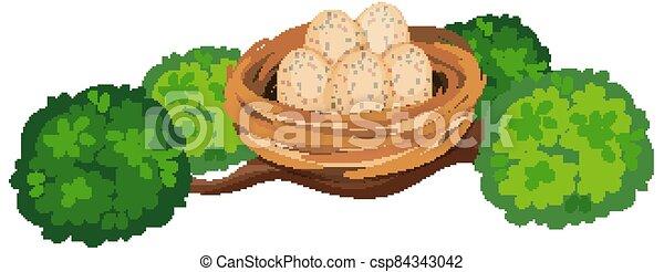 Eggs in the bird nest on tree branch - csp84343042