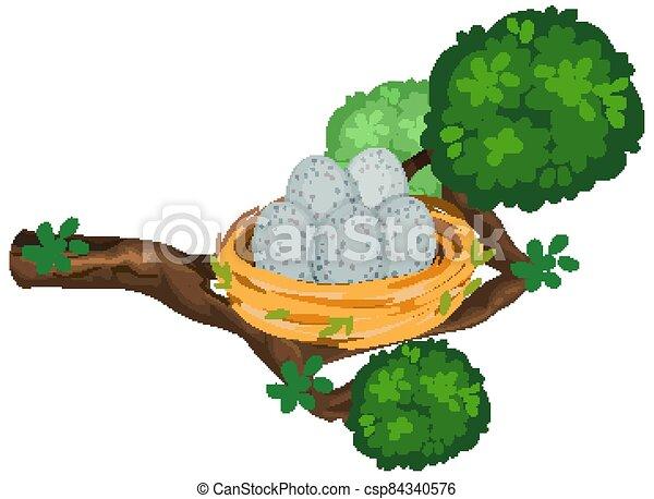 Eggs in the bird nest on tree branch - csp84340576