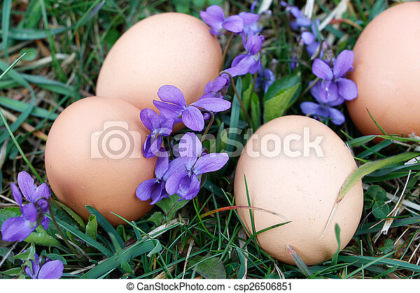 Eggs on ground - csp26506851