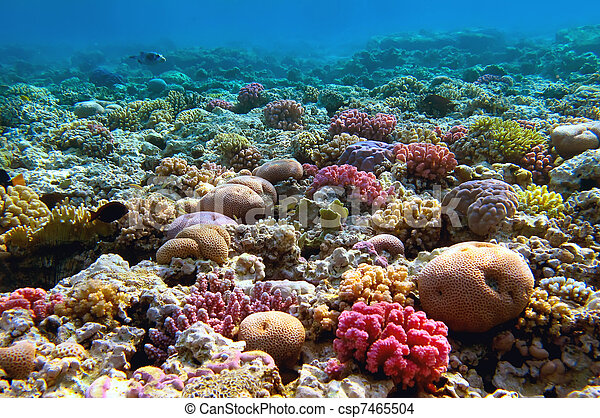 Coral reef, mar rojo, Egipto - csp7465504