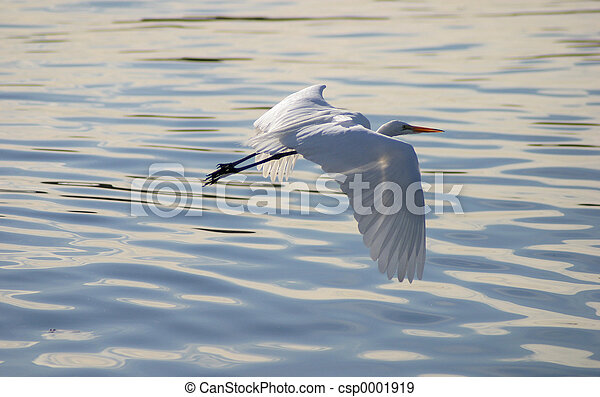 Egret - csp0001919