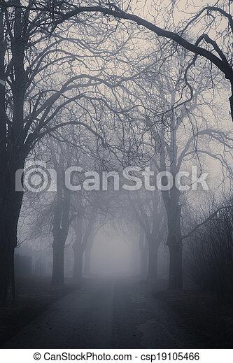 egyenes, körülvett, bitófák, átjáró, sötét, ködös - csp19105466
