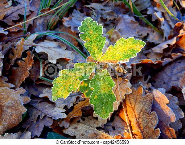 Eiche Quercus Robur Setzling Robur Eichenlaub Baum Morgen