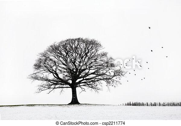 eiche, winter - csp2211774