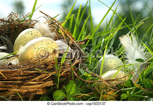eier, gras, nest - csp1633137